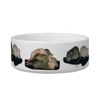 rats everywhere rat feeding bowl pet bowls