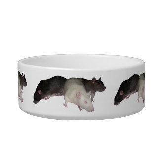 rats feeding bowl cat food bowls