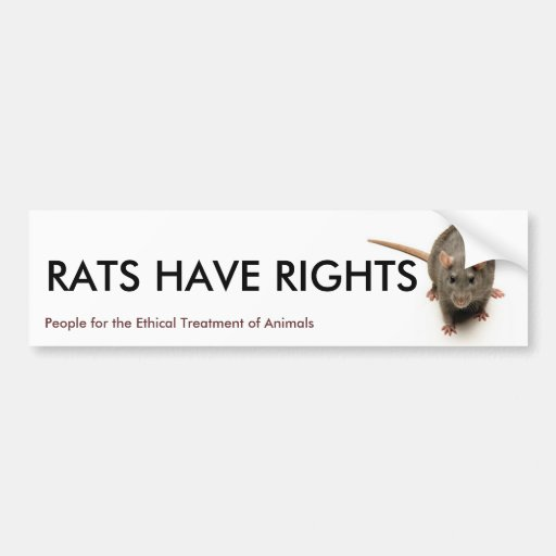 do rats have rights Identify rats and mice and recognize if you have a problem—they are prolific breeders so ignoring a problem results in a much larger and more damaging set traps at right angles along walls where rodents travel, with the bait side of the trap toward the wall use bait like dried fruit, peanut butter (mixed with oats), cheese.