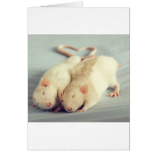 Rats heart tail card