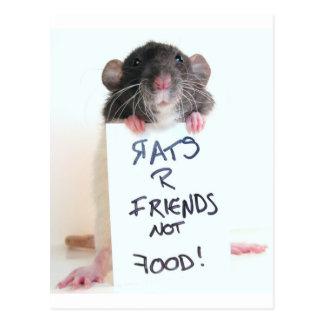 Rats R Friends Not Food 2 Postcard