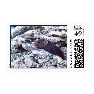 Rats Rock Stamp