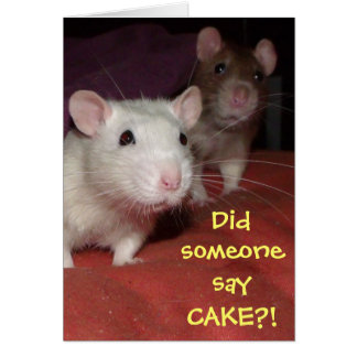 rats talking greetings card cards