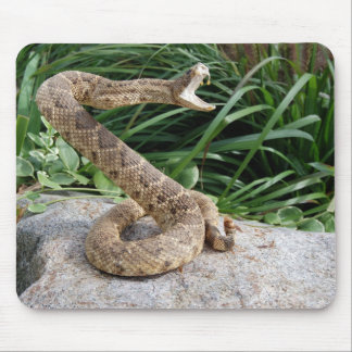rattle snake on a rock mouse pad