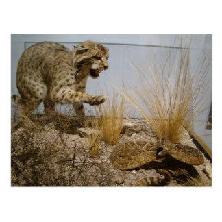 Rattle Snake vs Bobcat Postcard
