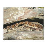Rattlesnake at Shenandoah National Park Canvas Print