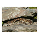 Rattlesnake at Shenandoah National Park Card