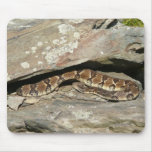 Rattlesnake at Shenandoah National Park Mouse Pad
