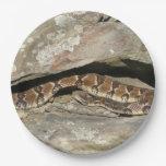 Rattlesnake at Shenandoah National Park Paper Plate