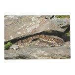 Rattlesnake at Shenandoah National Park Placemat