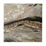 Rattlesnake at Shenandoah National Park Tile