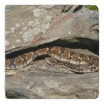 Rattlesnake at Shenandoah National Park Trivet