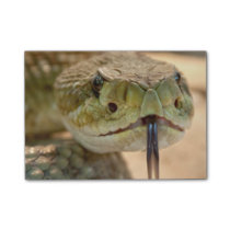 Rattlesnake Closeup Photo Post-it Notes