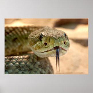 Rattlesnake Closeup Photo Poster