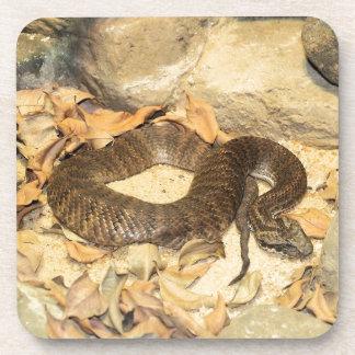 Rattlesnake Coaster