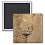 Rattlesnake Head 2 Inch Square Magnet