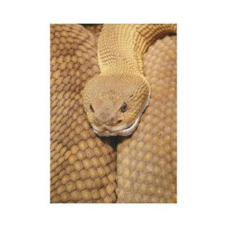 Rattlesnake Head Canvas Print