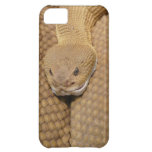 Rattlesnake Head iPhone 5C Cover