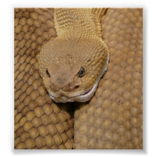 Rattlesnake Head Print