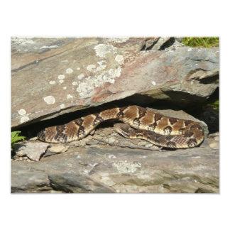 Rattlesnake Nature Photography Photo Print