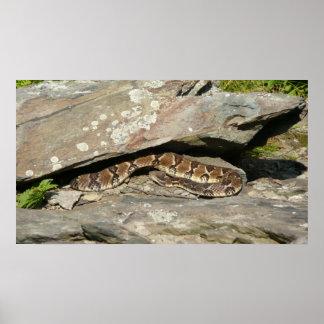 Rattlesnake Nature Photography Poster