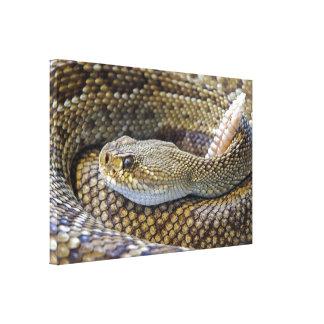 Rattlesnake photo canvas print