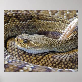 Rattlesnake photo poster