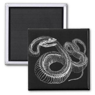 Rattlesnake Skeleton 2 Inch Square Magnet