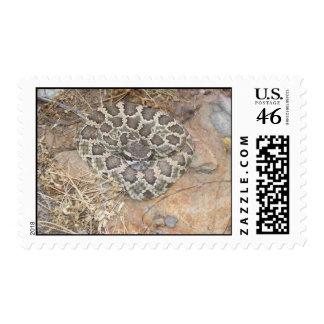 RattleSnake Stamp