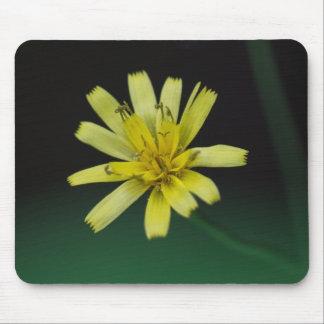 Rattlesnake Weed Yellow Wildflower Floral Mousepad