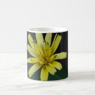 Rattlesnake Weed Yellow Wildflower Floral Mug Cup