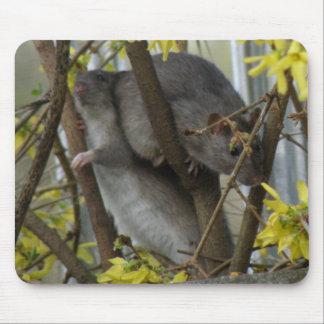 Ratty cuddles Mousepad