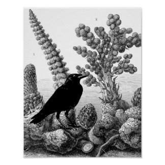 Raven Among The Botanicals No.1 Poster
