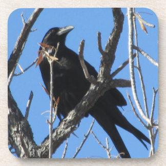 Raven Coasters