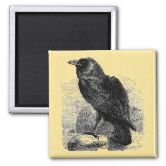 Raven Corvus 2 Inch Square Magnet