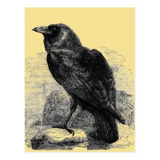 Raven Corvus Postcard