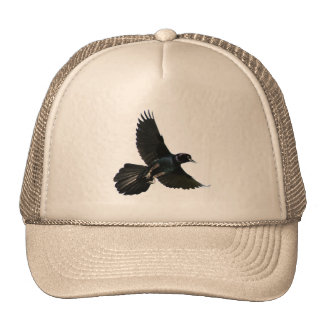 Raven Crow bird flying Hat