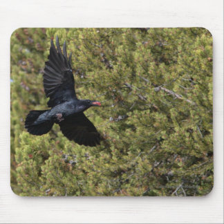 Raven Delivery Mouse Pads