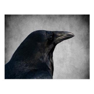 Raven Glamour Shot Postcard