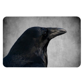 Raven Glamour Shot Rectangular Photo Magnet