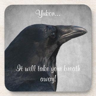 Raven Glamour Shot; Yukon Territory Souvenir Beverage Coaster