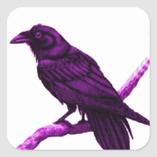 Raven in Purple Gifts by Sharles Square Sticker