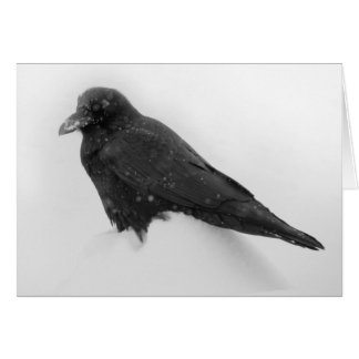 Raven in Snow Card