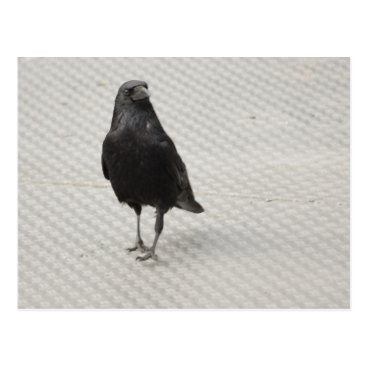 Halloween Themed raven on metall postcard