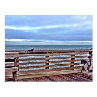 Raven on the Jennette's pier obx North Carolina Postcard