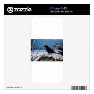 Raven Reflection collection Skins For iPhone 4