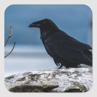 Raven Reflection collection Square Sticker