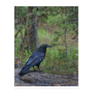 Raven s Respite Postcard