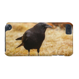 Raven & Summer Grass Corvid-lovers Photo iPod Touch 5G Cover