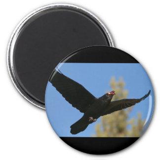 Raven with Bison Refrigerator Magnets